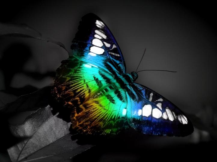 dans fond ecran papillon 076f5b59