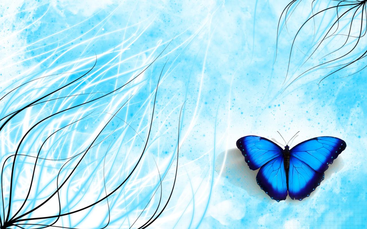 fonds ecran papillon